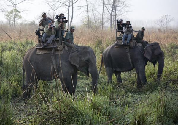 Looking for Rhinos, Chitwan Park, Nepal