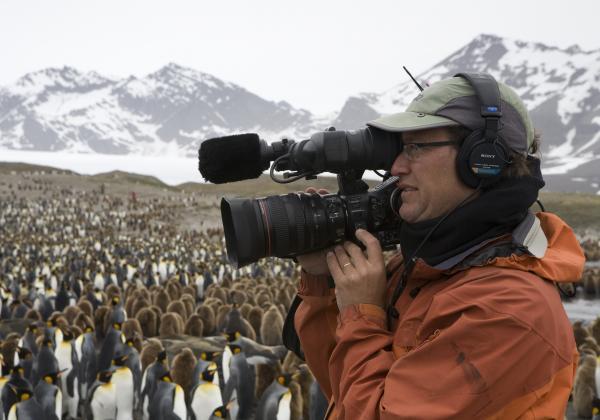 Nearly a million King Penguins - imagine the smell! South Georgia Island